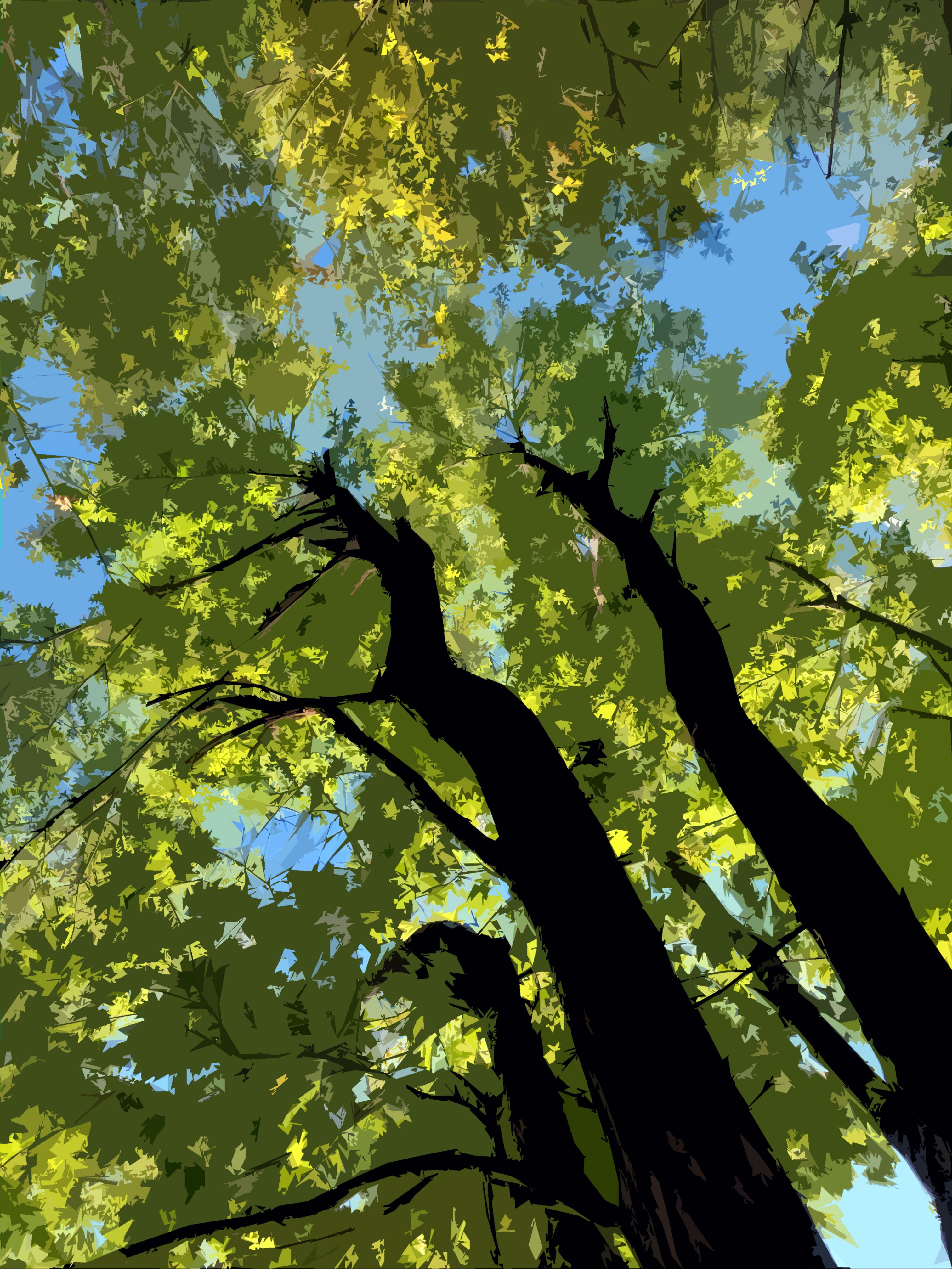 photo by Jen Matson, Boston artist. Manipulated, new hampshire nature preserve