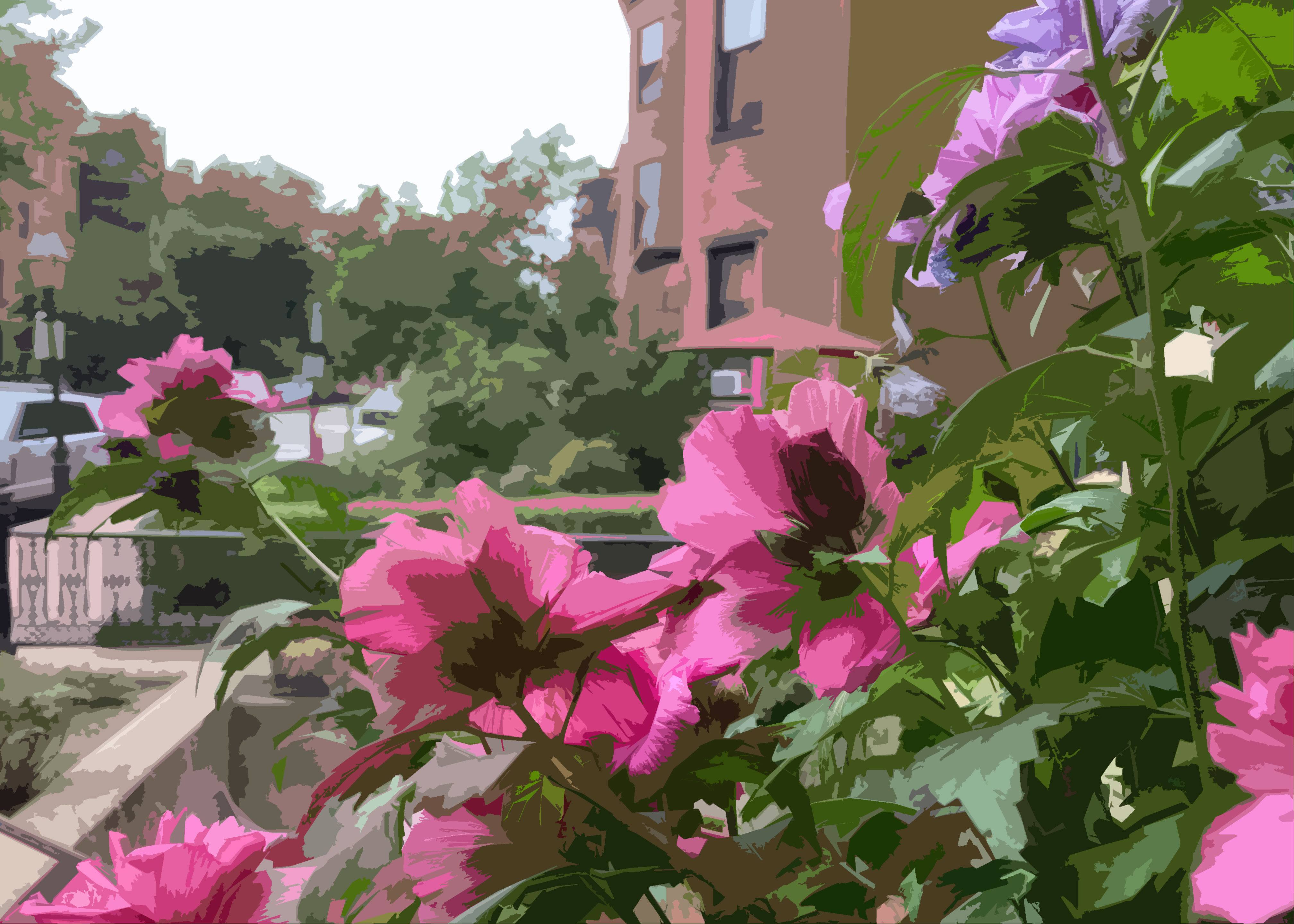 Rose of Sharon, Back Bay