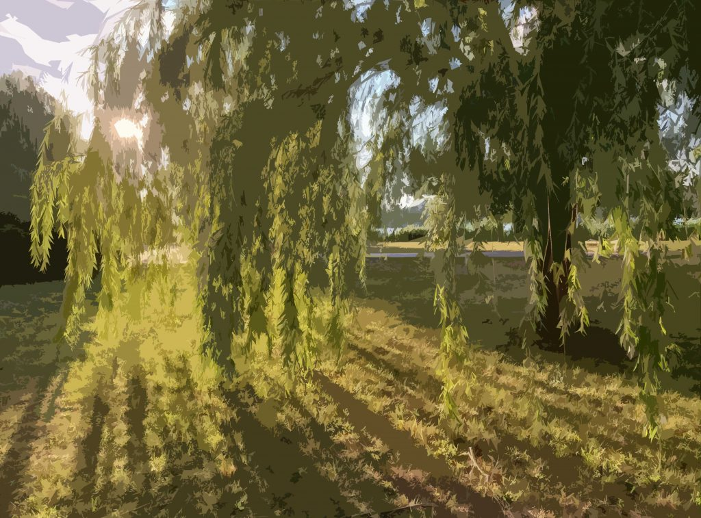Photo by Jen Matson of sunlight through Willow branches