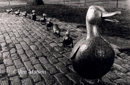 Ducks at Night