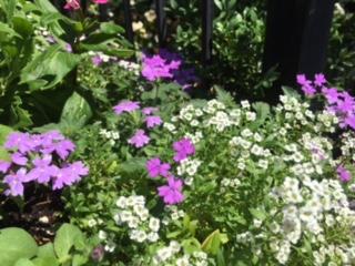 City mini gardens